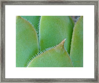 Chick Framed Print by Chris Berry