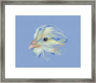 Chick - Plymouth Barred Rock Framed Print