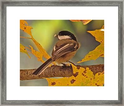 Chickadee 105 Framed Print by Patsy Pratt