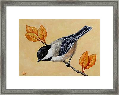 Chickadee And Autumn Leaves Framed Print by Crista Forest