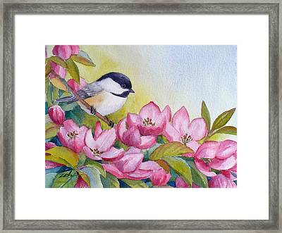 Chickadee And Crabapple Flowers Framed Print by Janet  Zeh