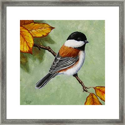 Chickadee - Autumn Charm Framed Print by Crista Forest