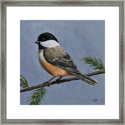 Chickadee Charm Framed Print by Crista Forest