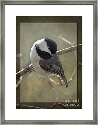 Chickadee Early Bird I Framed Print by Debbie Portwood