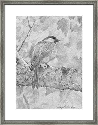 Chickadee In The Rain Framed Print