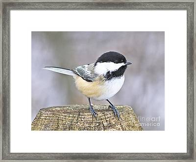 Framed Print featuring the photograph Chickadee On A Used To Be Tree by Heather King