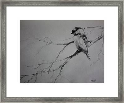 Chickadee Sketch Framed Print