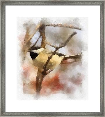 Framed Print featuring the painting Chickadee Watercolor by Kerri Farley