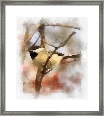 Chickadee Watercolor Framed Print by Kerri Farley