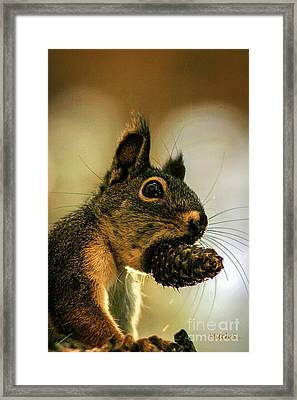 Framed Print featuring the photograph Chickaree by Mitch Shindelbower