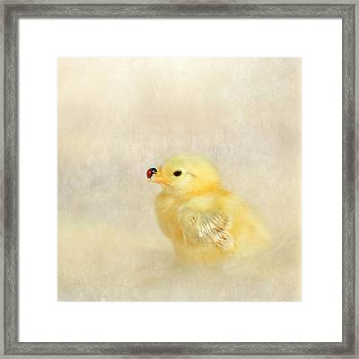 Chicken And Ladybug Framed Print by Heike Hultsch