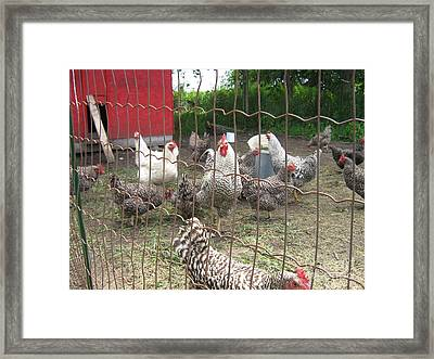 Chicken Coop. Framed Print
