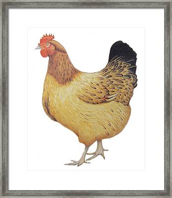Chicken Framed Print by Ele Grafton