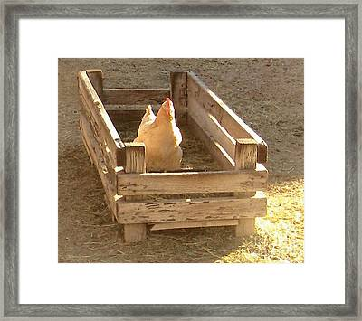 Framed Print featuring the photograph Chicken In A Box by Cristophers Dream Artistry
