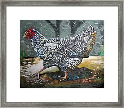 Chicken In The Pen Framed Print