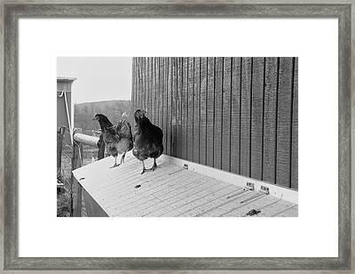 Chicken Inspectors Framed Print by Daniel Kasztelan