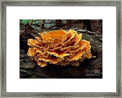 Chicken Mushroom Framed Print