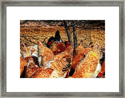 Chicken Wings Framed Print by Barbara D Richards