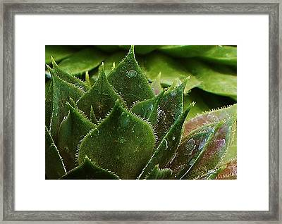 Chicks And Hens Framed Print by Bruce Bley