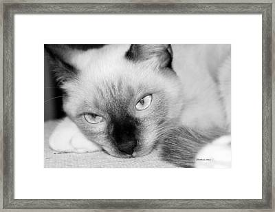 Framed Print featuring the photograph Chico by Dick Botkin
