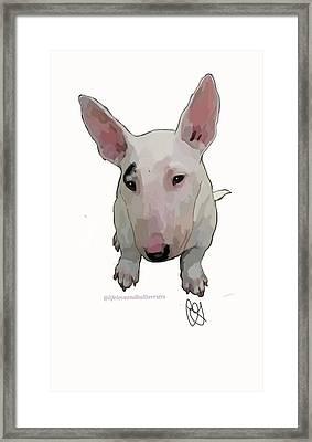 Chico The Bull Terrier Framed Print