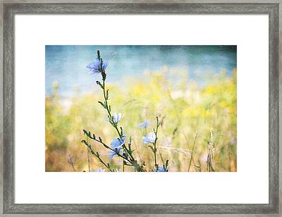 Framed Print featuring the photograph Chicory By The Beach by Peggy Collins