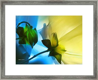 Framed Print featuring the photograph Chicos by Alfonso Garcia