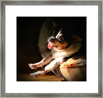 Chihuahua Cuteness Framed Print by Posey Clements