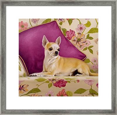 Chihuahua II Framed Print by John Silver