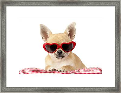 Chihuahua In Heart Sunglasses Dp813 Framed Print