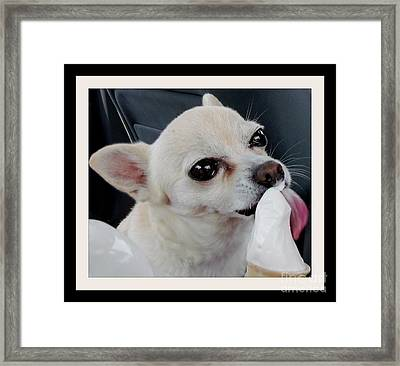Chihuahua Keeps Cool On A Hot Day Framed Print by Gail Matthews