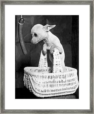 Chihuahua Longs For Sausage Framed Print by Underwood Archives