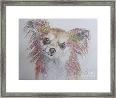 Chihuahua Framed Print by Lyric Lucas
