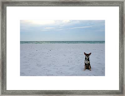 Chihuahua On The Beach Framed Print by Georgia Fowler