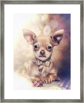 Chihuahua Puppy Framed Print by Cindy Grundsten