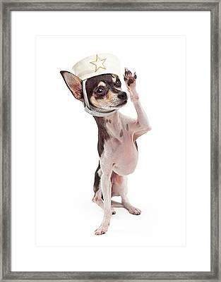 Chihuahua Sailor Dog Saluting Framed Print