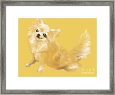 Dog Chihuahua Sandy Framed Print by Go Van Kampen