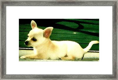 Chihuahua Watercolor Framed Print by Gail Matthews