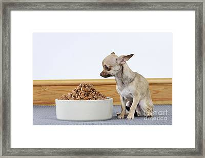 Chihuahua With Food Framed Print by John Daniels