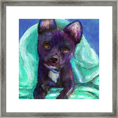 Chihuaua Framed Print by Jane Schnetlage