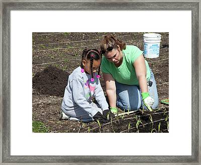 Child And Adult Planting Onions Framed Print
