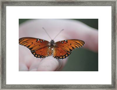 Child And Butterfly - We Shall Renew Again Framed Print by Carolina Liechtenstein