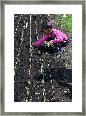 Child Planting Onions Framed Print