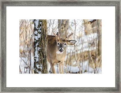 Childish Buck Framed Print