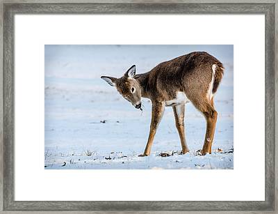 Framed Print featuring the photograph Children Eat Free by Steven Santamour