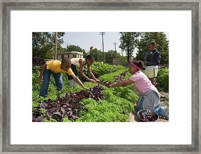 Children Working In An Organic Garden Framed Print by Jim West