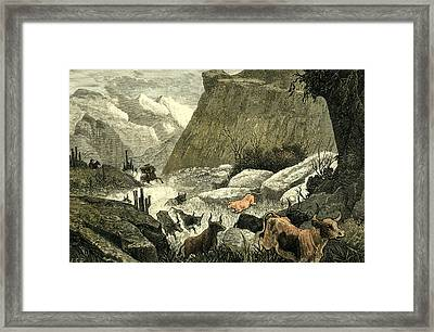 Chile Rodeo 1880 Driving Down The Cattle From The Mountains Framed Print by Chilean School