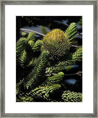 Chile South America Detail Of Branches Framed Print
