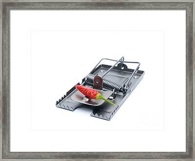 Chili Trap Framed Print