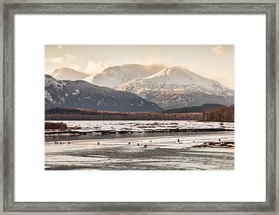 Chilkat Bald Eagle Preserve In Winter Framed Print
